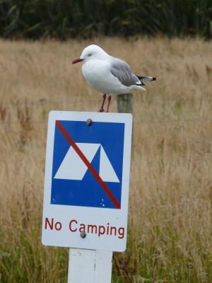 Hier bitte nicht campen