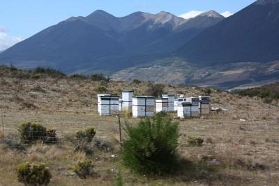 Bienenstöcke-an-der-Strecke