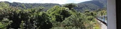Dichte-Vegetation