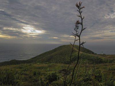 Fernsicht am Cape Reinga