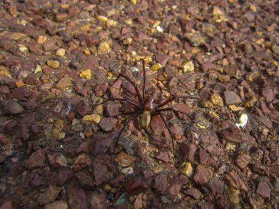 Spinne am Cape Reinga