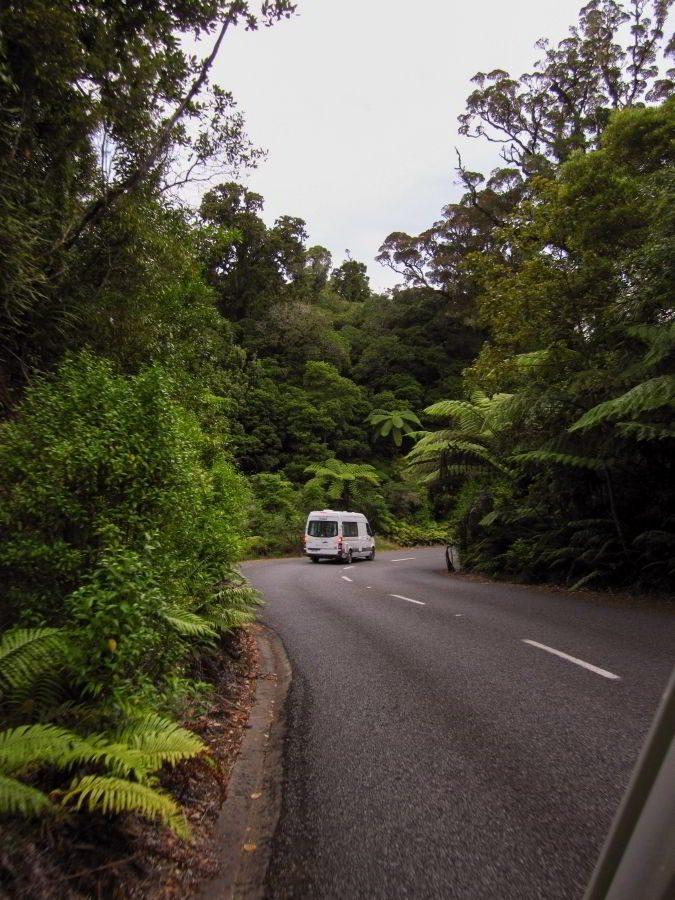 Kauri_Trees_Neuseeland-erleben-info_02