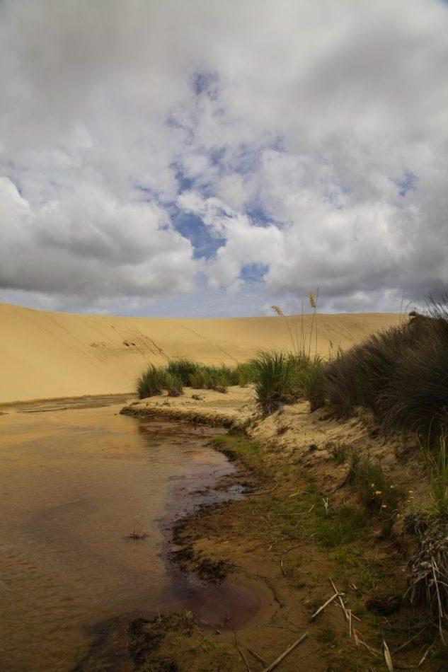 Te_Paki_Sand_Dunes_05