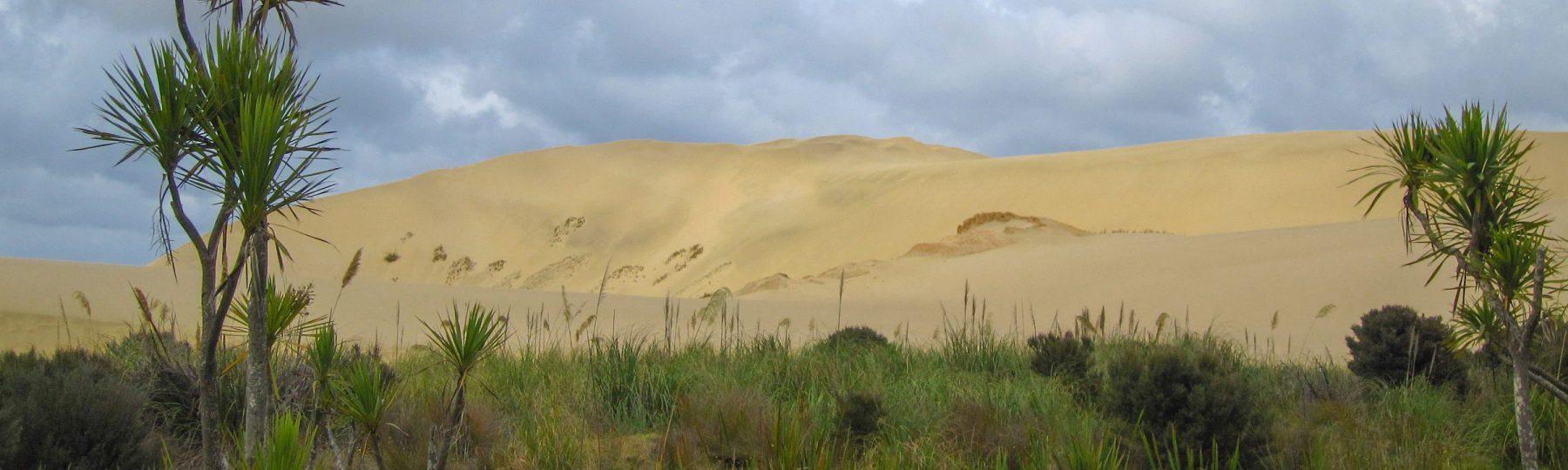 Sanddünen im Grünen - Te Paki auf Neuseeland