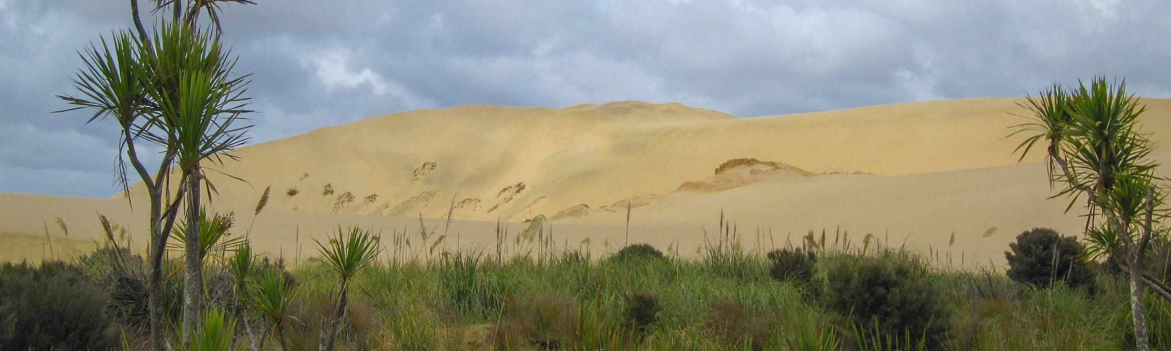 Te Paki – Sanddünen mitten im Grünen