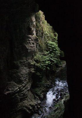 Bushwalk bei den Waitomo Caves