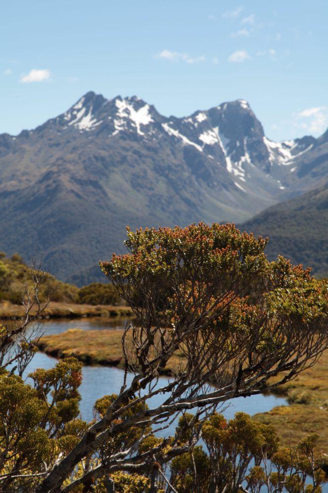 Fiordland - Key Summit, toller Ausblick.
