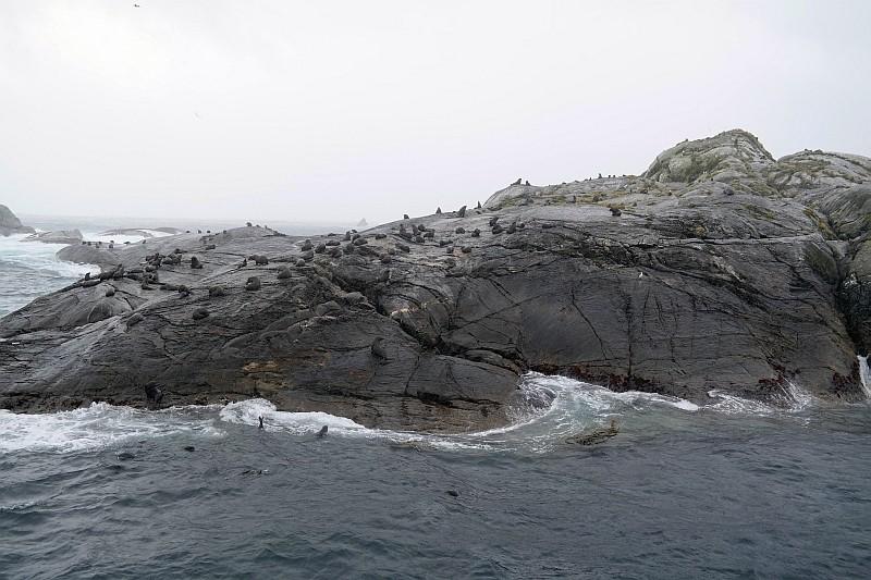 Seelöwen im Doutful Sound