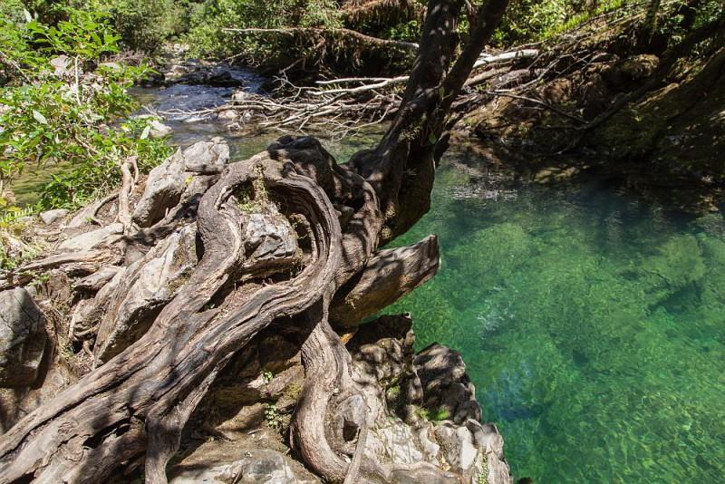 Alte knorrige Bäume am Rand des Baches Riuwaka