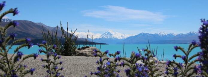 Ausblick auf Mt. Cook / Aoraki