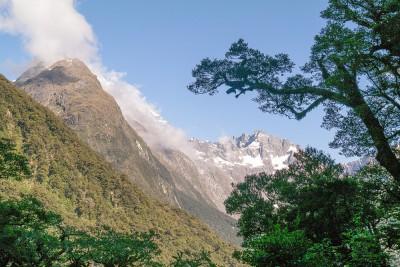 Berge, Urwald - pure Natur im Fiordland