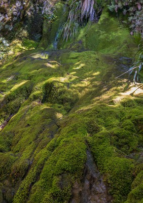 Moosbedeckte Felsen auf dem Routeburn Track - Südinsel Neuseeland
