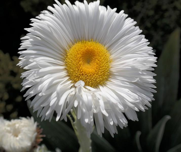 Blume am Hooker Lake