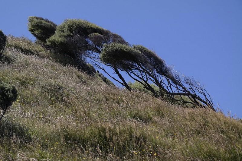 Wind formt die Büsche
