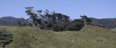 Bäume kuscheln sich in eine Senke