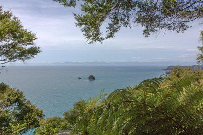 Viele Pflanzen wachsen im Abel Tasman National Park