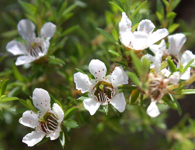Eine blühende Pflanze im Abel Tasman National Park.
