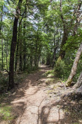 Wanderweg durch den Buchenwald