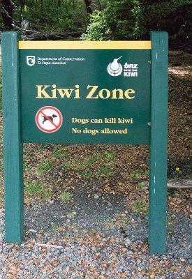 Hunde töten Kiwis