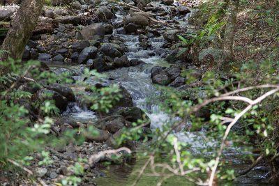 Kleiner Bach speist den Lake Rotoiti