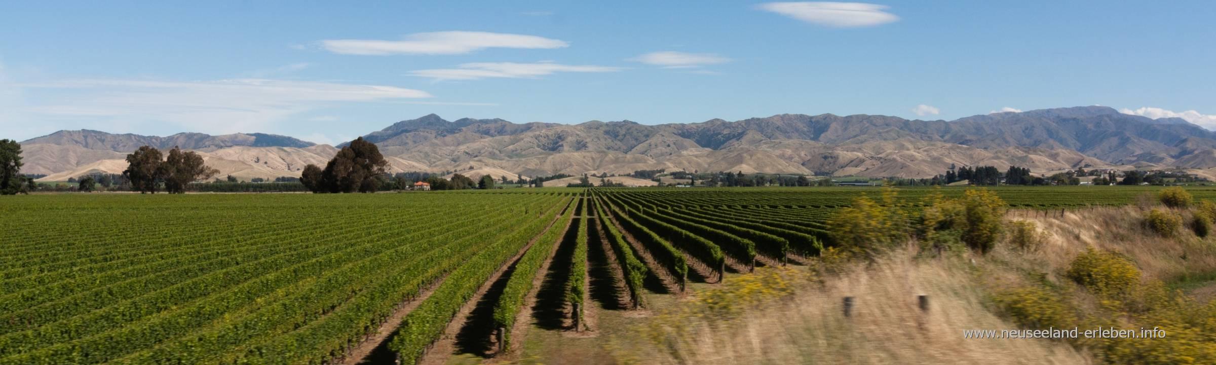 Weltklasse: Neuseeländischer Wein & ein deutscher Sommelier