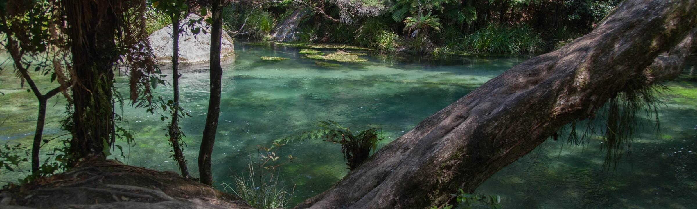 Tarawera Falls – ein Wasserfall, der aus dem Nichts entspringt