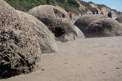 Moeraki_Boulders_Neuseeland-erleben-info_11