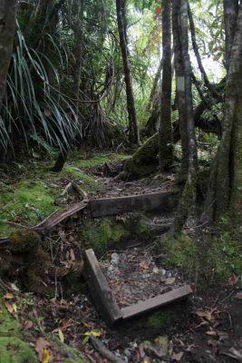 Stufen im Dschunge