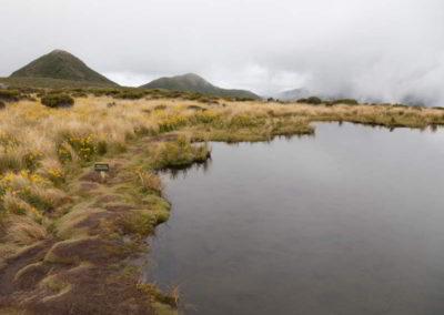 Klares Wasser und viel Moos drumherum - das muss ein Sumpfgebiet sein.