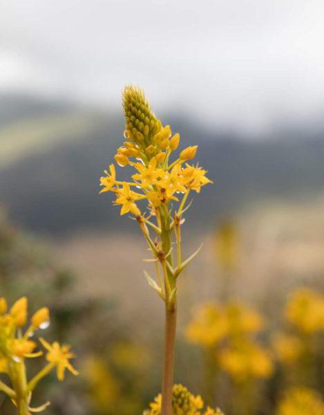 Eine blühnende Pflanze am Mount Taranaki