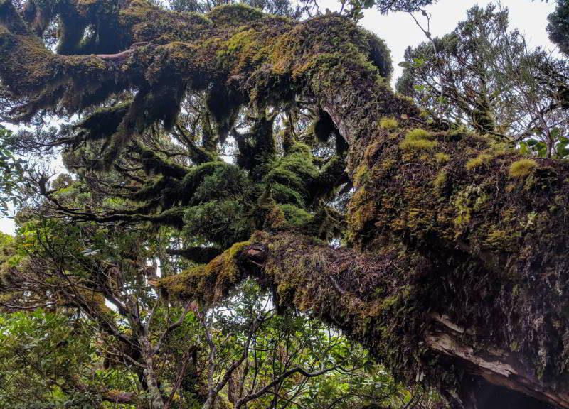 Ein knorriger alter Baumstamm mit Moosen und Flechten in Neuseeland