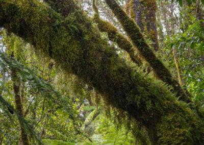 Wie ein individuelles Kleid umgeben die Flechten diesen Baumstamm. Sie fühlen sich samtig weich an. Und natürlich nass.