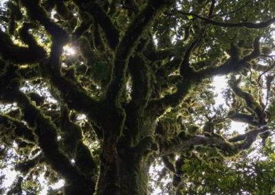 So sieht dann ein Baum aus, der mit Flechten überzogen ist. Schon ein wenig mysteriös oder?