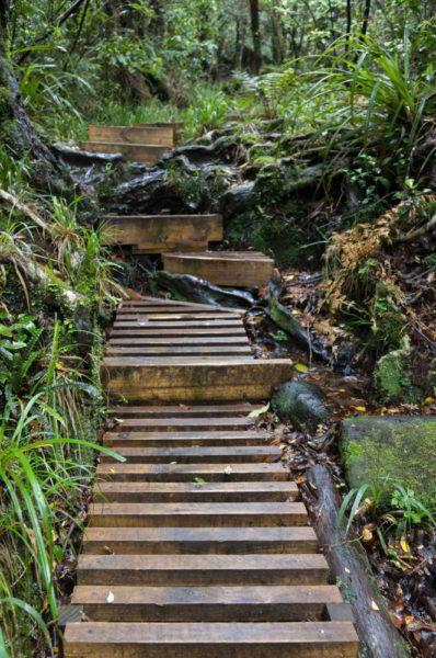 Holzstufen führen durch den Wald