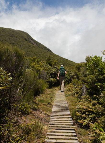 Sträucher neben dem Wanderweg in Neuseeland