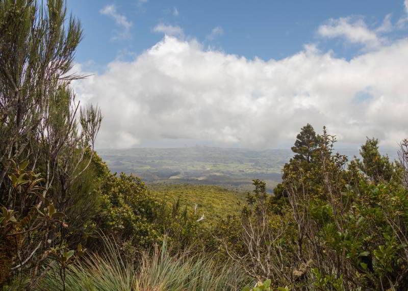 Blick vom Mangorei Track aus Richtung Meer