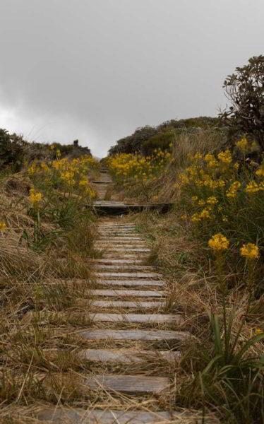 Wanderweg am Mount Taranaki
