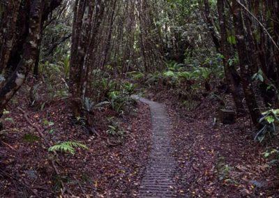 Der Weg führt direkt nach Mittelerde oder?