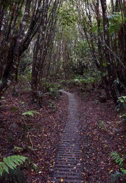 Ein Weg aus Holz führt durch den Wald