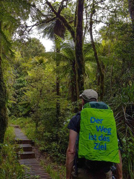 Ein Weg durch den neuseeländischen Wald