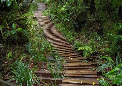 So verläuft der gesamte Weg durch den Wald - sehr gut zu Laufen und sicher für den Wald.