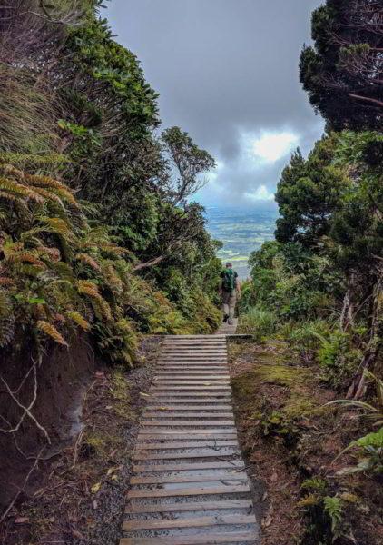 Weg durch den neuseeländischen Wald am Mount Taranaki