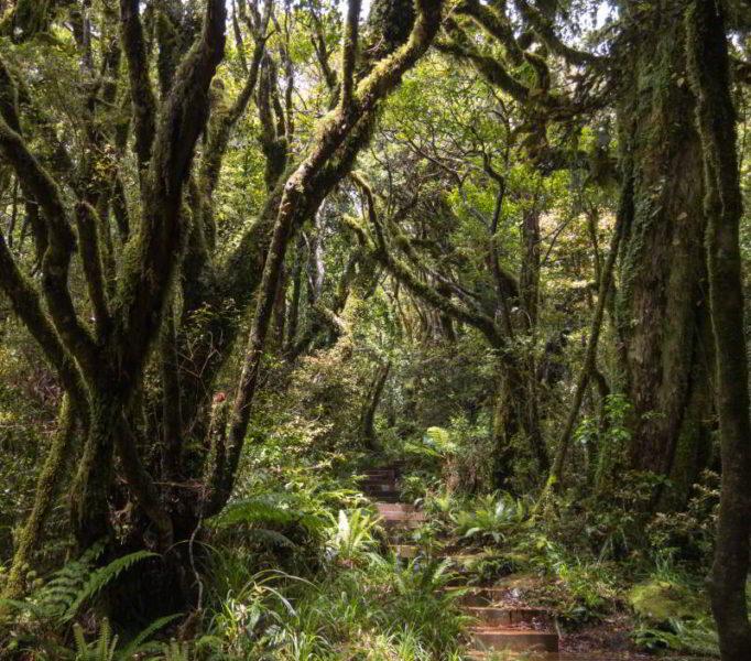 Ein dichter grüner Wald mit Holzstufen als Weg