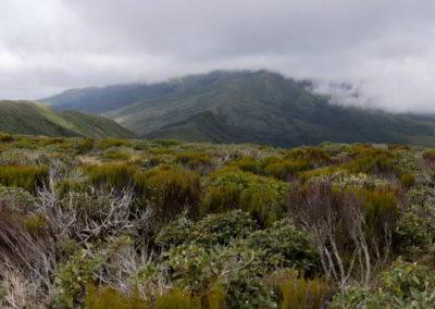 Oben angekommen liegt Mount Taranaki natürlich komplett in Wolken