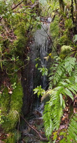 Ein kleiner Wasserfall am Wegesrand in Neuseeland