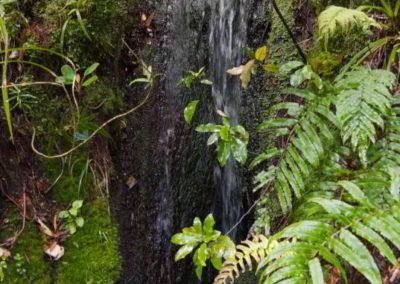Überall rauschen kleine Wasserfälle am Wegesrand vorbei.
