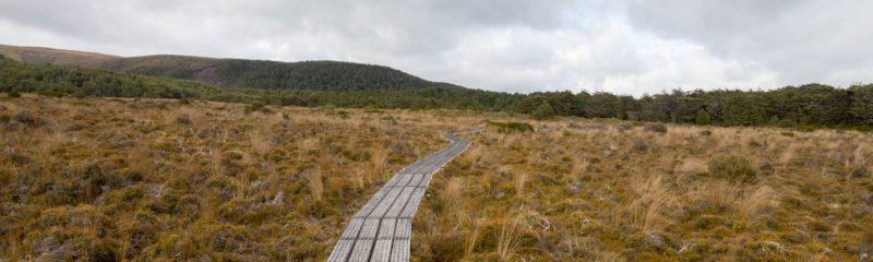 Ein hölzerner Steg führt über ein Moor