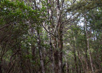 Der Weg beginnt und führt durch einen sattgrünen Wald.