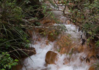 Oranges Flussbett mit grünen Wald - eine schöne Kombi.