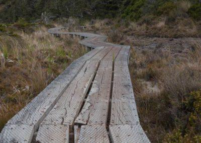 Wie vom DOC (Department of Conservation) gewohnt, sind auch auf dieser Wanderung die Wege gut angelegt - die Natur wird (hoffentlich) nur minimal gestört.